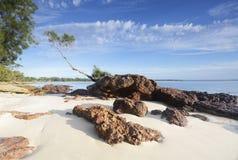 Árbol en una roca, Jervis Bay Imagen de archivo