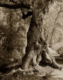 Árbol en una trayectoria Imagenes de archivo