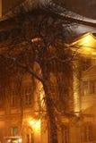 Árbol en una ventisca Foto de archivo
