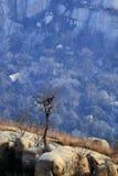 Árbol en valle Fotografía de archivo libre de regalías