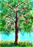 Árbol en verano Imagenes de archivo