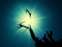Árbol en vigas del sol Imagenes de archivo