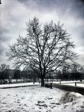 Árbol en Vilna imagenes de archivo