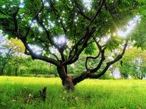 Árbol encantador verde con luz del sol y esperanzas foto de archivo