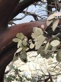 Árbol encontrado en el parque nacional de Yosemite imagenes de archivo