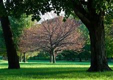 Árbol enmarcado Fotos de archivo libres de regalías