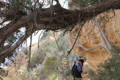 Árbol enmarcado Foto de archivo libre de regalías