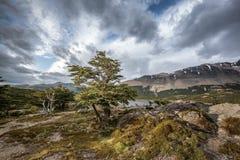 Árbol enmarcado en nubes Imagenes de archivo