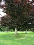 Árbol enorme Fotografía de archivo