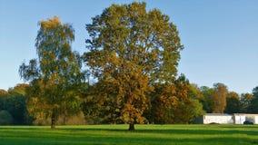 Árbol enorme del paisaje del otoño con las hojas amarilleadas Imágenes de archivo libres de regalías
