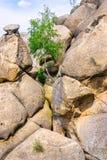 Árbol entre las rocas Imagenes de archivo