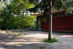 Árbol envejecido en yarda de edificio chino antiguo en el verano soleado DA fotografía de archivo