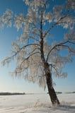 árbol escarchado Foto de archivo