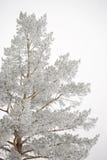 Árbol escarchado Imagenes de archivo