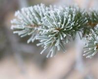Árbol escarchado Fotos de archivo