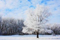 Árbol escarchado foto de archivo libre de regalías