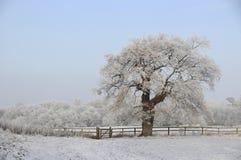 Árbol escarchado en campo Imagen de archivo libre de regalías