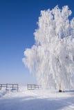 Árbol escarchado por el camino nevoso Foto de archivo