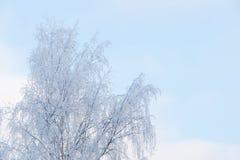 Árbol escarchado y cielo azul Imagenes de archivo