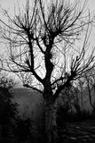 Árbol espeluznante viejo asustadizo Fotos de archivo