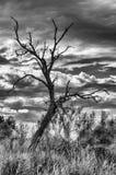 Árbol esquelético Foto de archivo