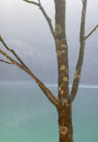Árbol estéril Foto de archivo