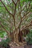 Árbol exótico Imagenes de archivo