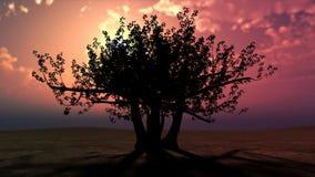 Árbol fabuloso contra una puesta del sol hermosa Imágenes de archivo libres de regalías