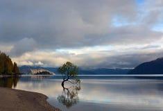 Árbol famoso que crece en el lago Wanaka, Nueva Zelanda foto de archivo libre de regalías