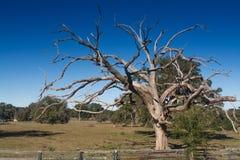 Árbol fantasmagórico Imagenes de archivo