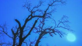Árbol fantasmagórico Fotografía de archivo