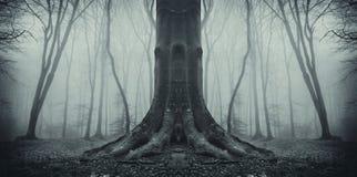 Árbol fantasmagórico simétrico en bosque con niebla imagenes de archivo