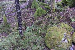 Árbol finlandia Fotos de archivo