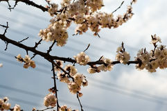 Árbol florecido en ciudad imagenes de archivo