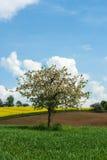 Árbol floreciente Fotos de archivo