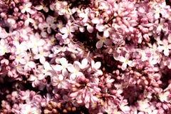 árbol floreciente Imagenes de archivo