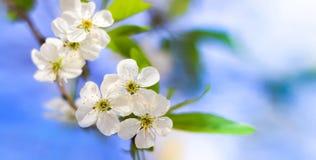árbol floreciente Imágenes de archivo libres de regalías