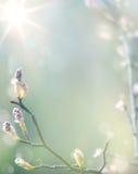 Árbol floreciente de la primavera de Art Beautiful en fondo del cielo Foto de archivo