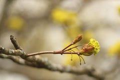árbol floreciente de la primavera en un parque Imagen de archivo libre de regalías