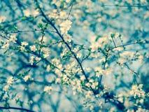 árbol floreciente de los tonos azules Imagen de archivo libre de regalías