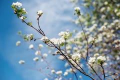 Árbol floreciente en el jardín Fotos de archivo