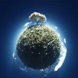 Árbol floreciente en el pequeño planeta Fotografía de archivo libre de regalías