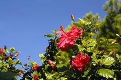 Árbol floreciente en fondo del cielo imagen de archivo libre de regalías