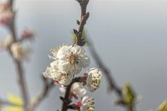 Árbol floreciente estacional fotos de archivo
