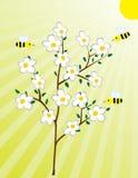 Árbol floreciente y las abejas Imagen de archivo