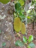 Árbol Forest Garden Fruit Natural imagen de archivo libre de regalías