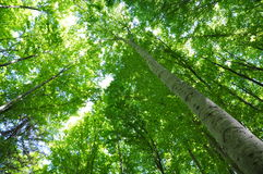 Árbol forestal Imagen de archivo