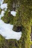 Árbol forestal cubierto de musgo alterado Digital del barkwinter de la textura fotos de archivo libres de regalías