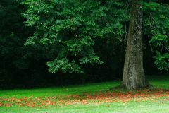 Árbol forestal de madera tranquilo que florecen caída de pétalos y dispersan alrededor del bosque suave molido por mañana tranqui foto de archivo libre de regalías