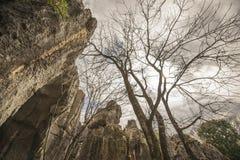 Árbol forestal de piedra Imagen de archivo libre de regalías